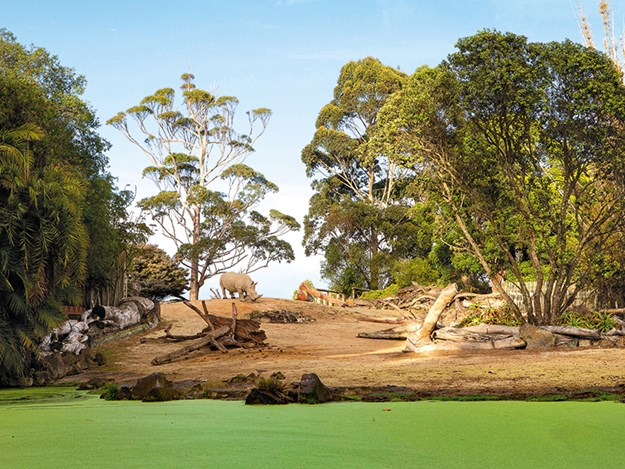 The African savannah habitat for rhino and nyala antelope