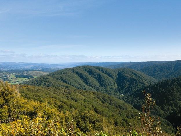 Kaitoke regional park hike