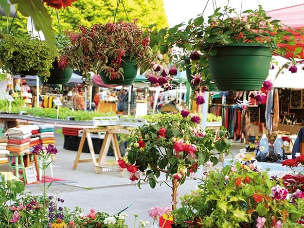 Motueka Sunday Market - credit abeltasman.jpg