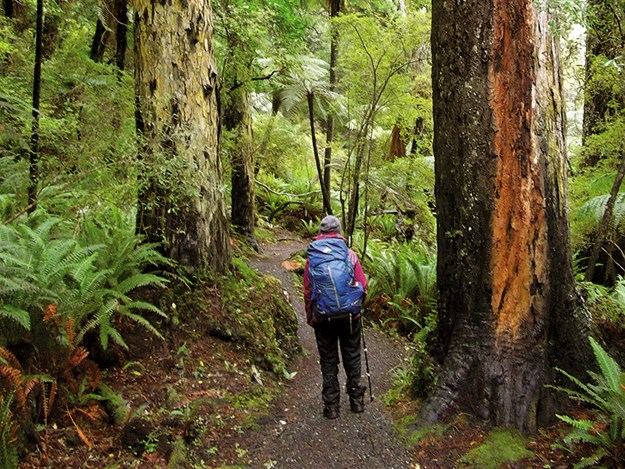 Rakiura Track, close by Port William Hut.jpg