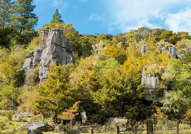 Kawiti caves above ground.jpg