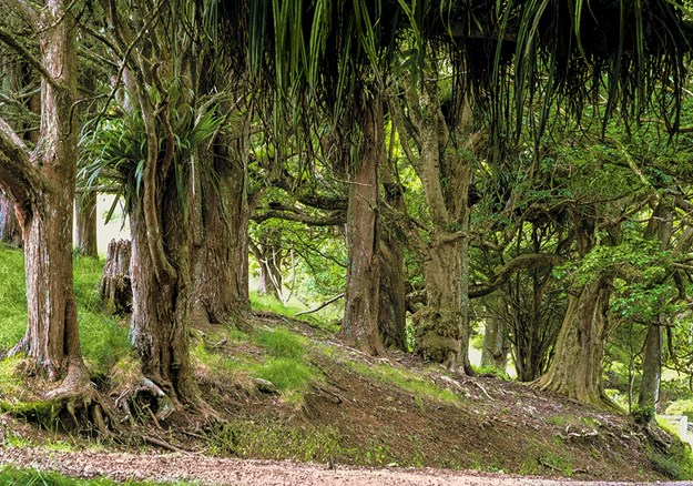 walk through the old forests  that bore witness to the Battle of Ruapekapeka.jpg