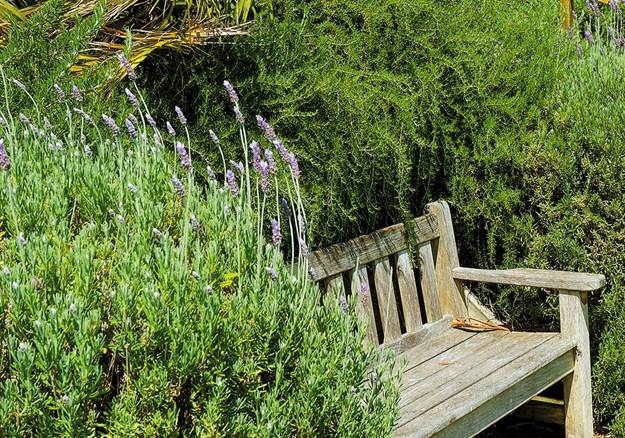 A fragrant place to enjoy the view beside lavender and rosemary bushes at Bason