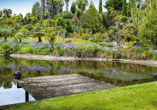 Agapanthus circle the Paloma Gardens pond