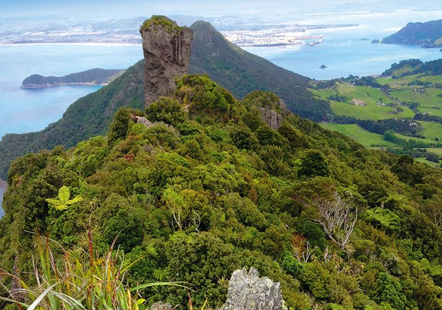 Looking The view from Bream Head Summit, at the end of the wrong trail on the Whara Track.jpg