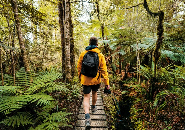 Hiking through the Kepler Track rainforest