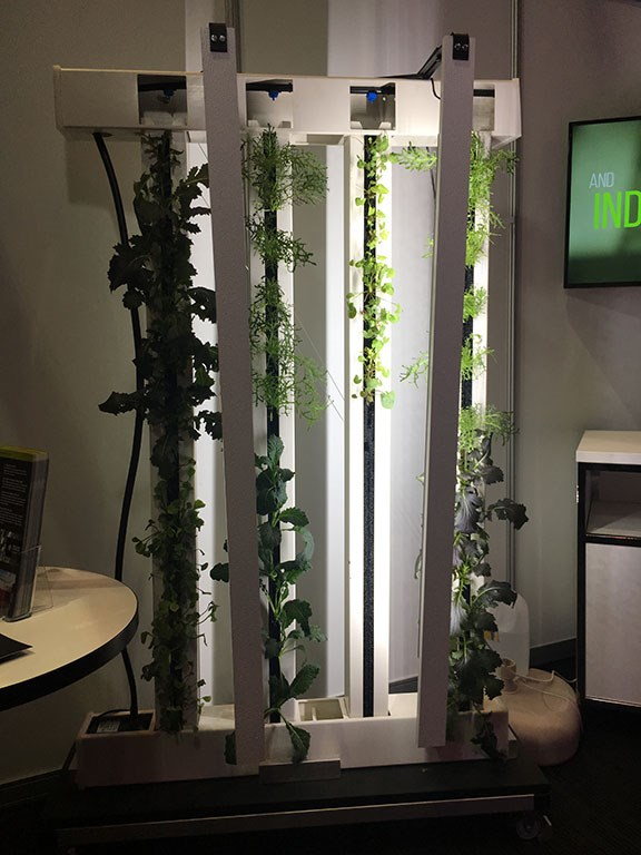 Modular Farms uses LED lights to help grow leafy greens indoors.