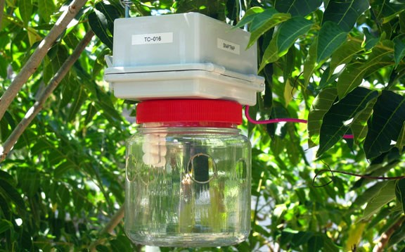The Snaptrap provides a camera to monitor existing fruitfly traps