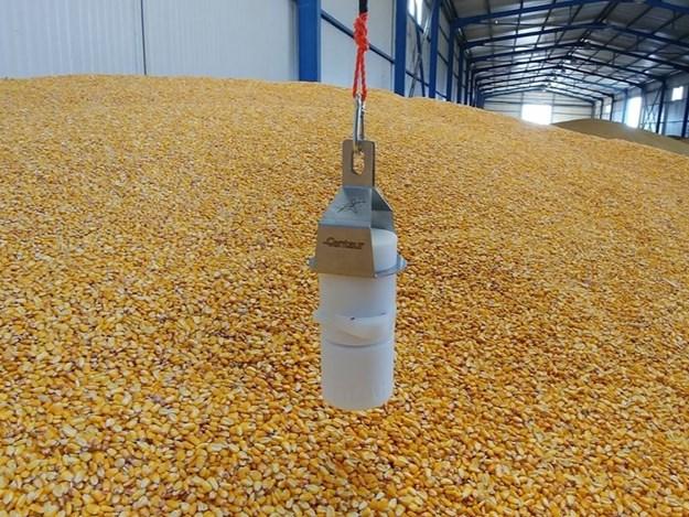 Centaur grain sensors