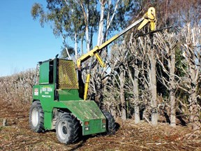 case tree trimmer / hedge cutter 774693