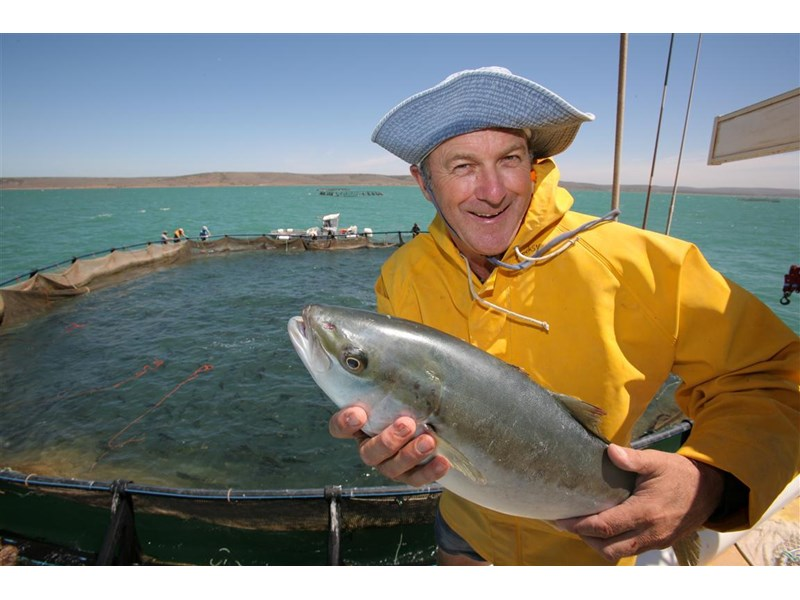 south australian finfish operation 257628 005