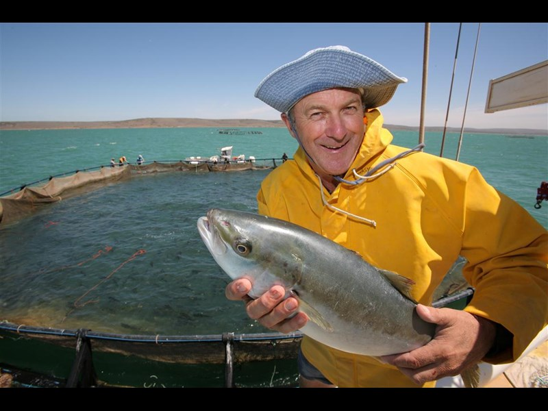 south australian finfish operation 257628 009