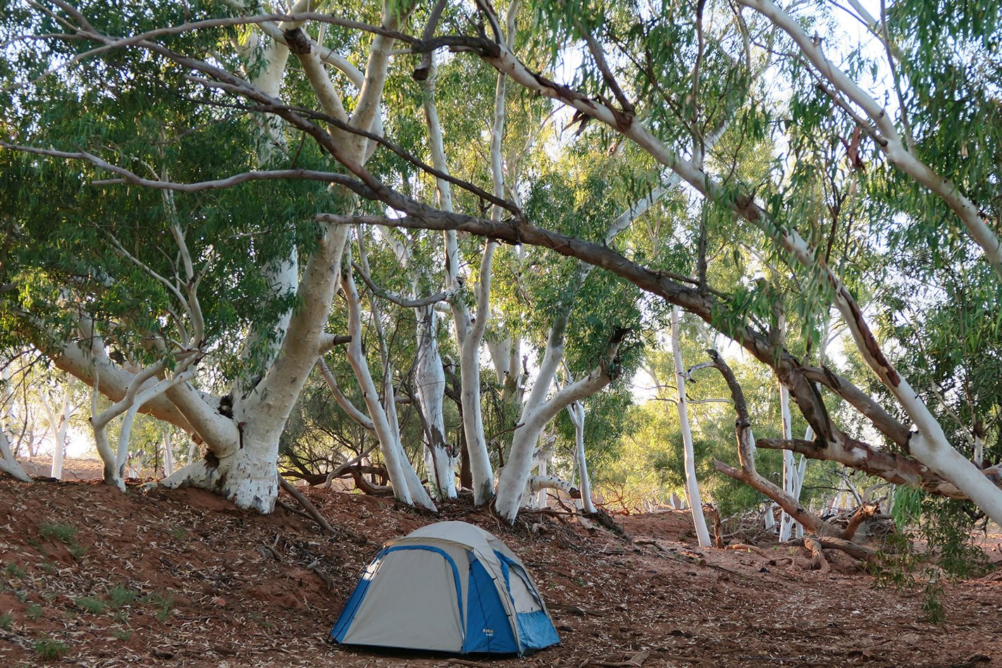 Camping on the Gascoyne River