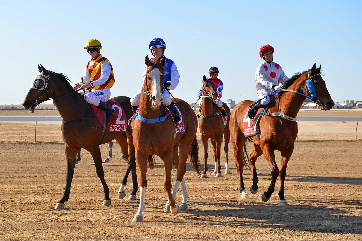 Horses at Birdsville Races