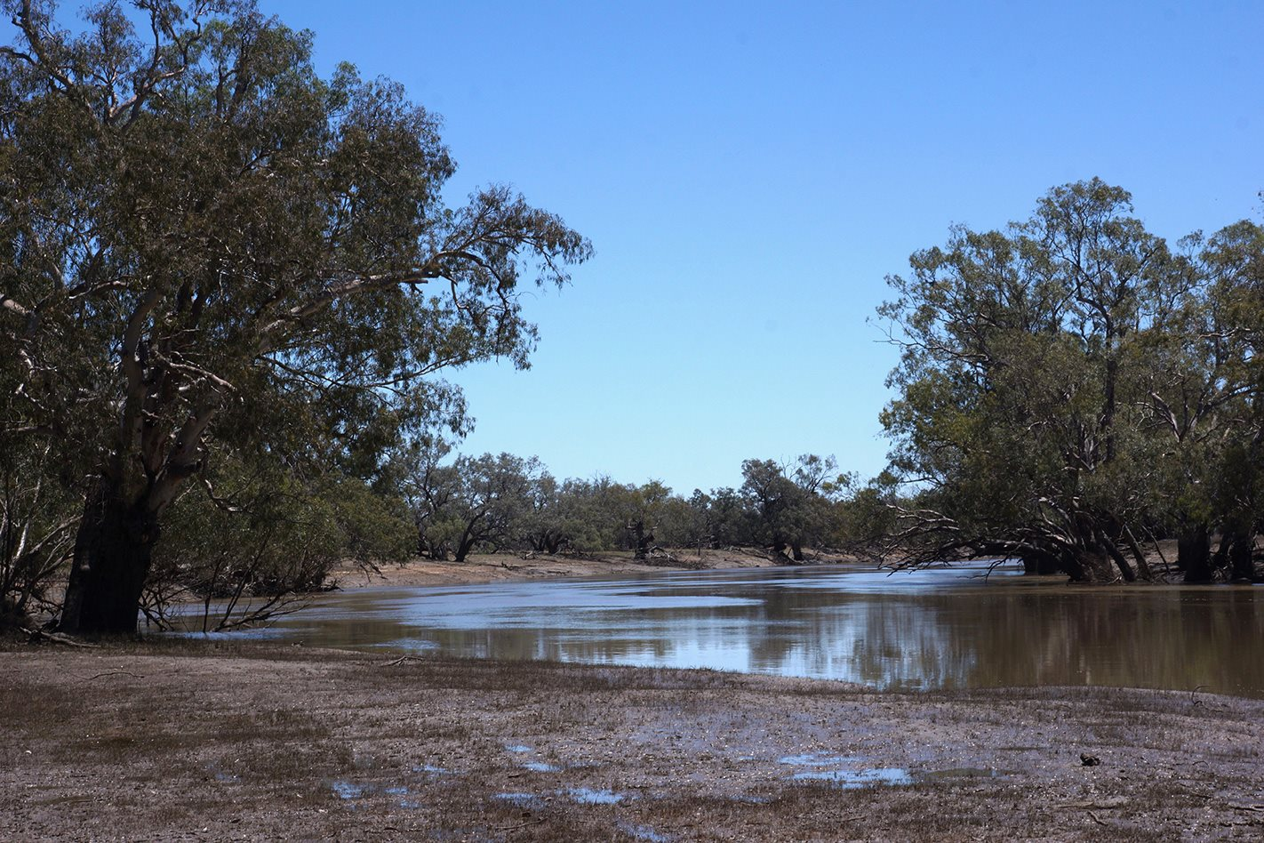 Gundabooka Darling River NSW.jpg