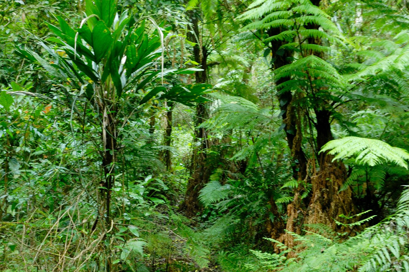 Lush-rainforest-Border-Ranges.jpg