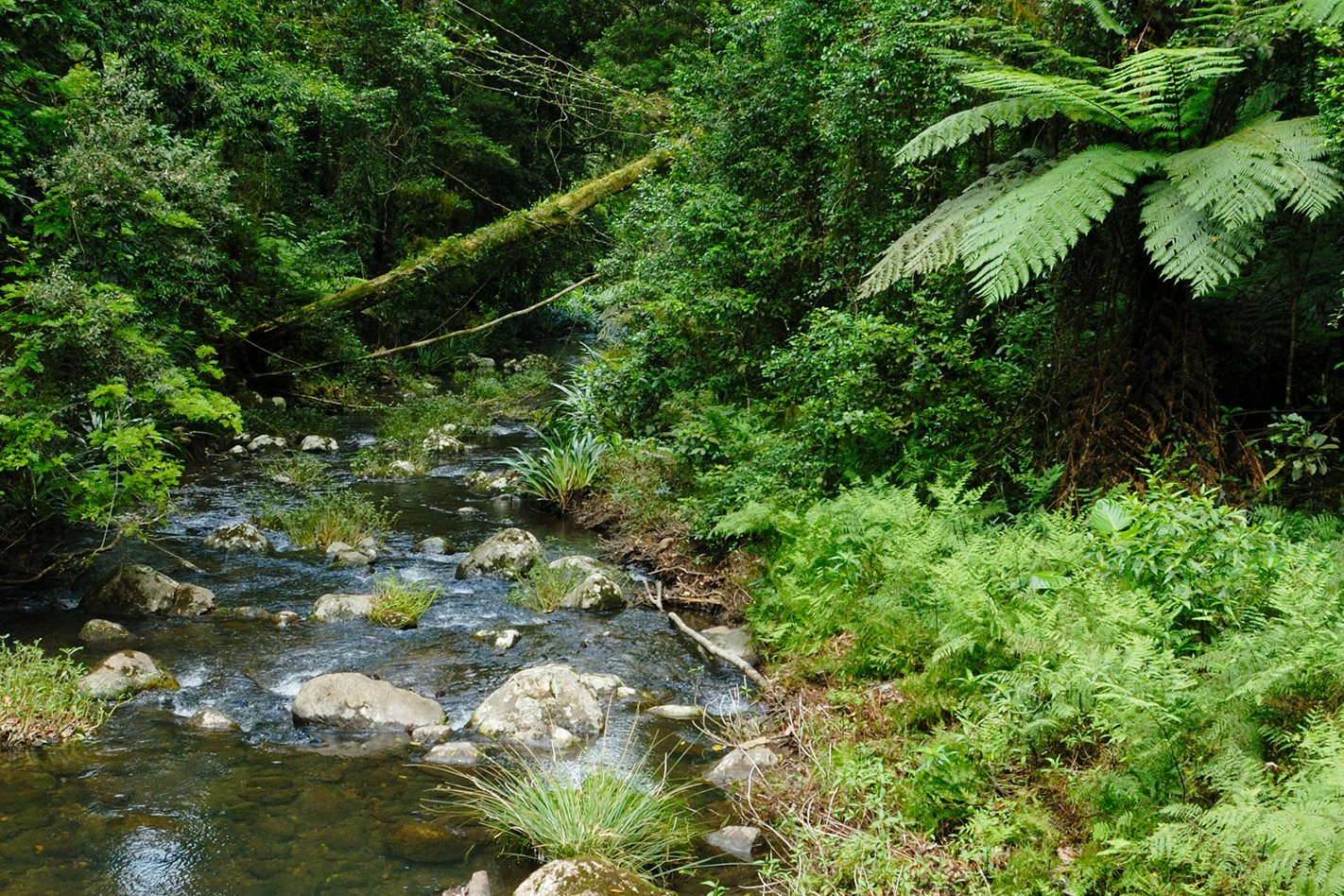 Creek-flowing-through-Border-Ranges-National-Park.jpg