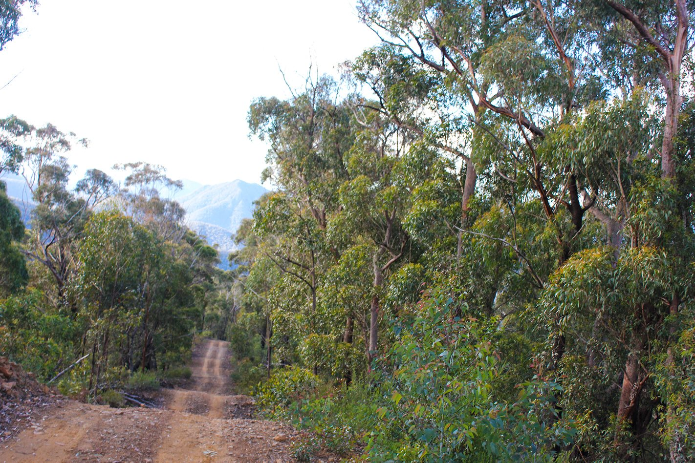 Deua National Park NSW 4WD tracks.jpg