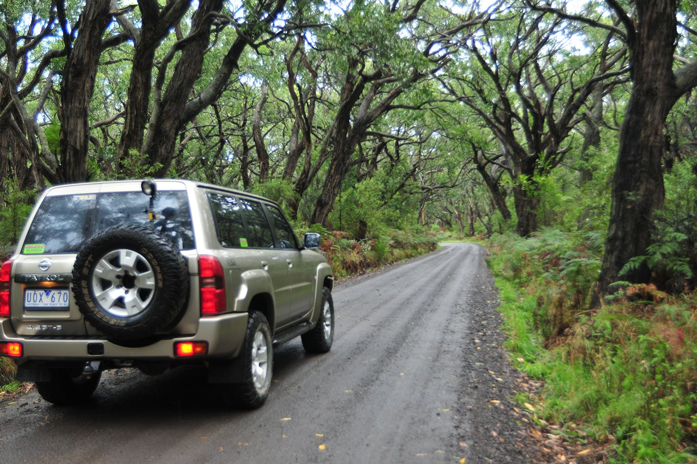 Cape-Otway,-VIC-driving-through-the-National-Park.jpg