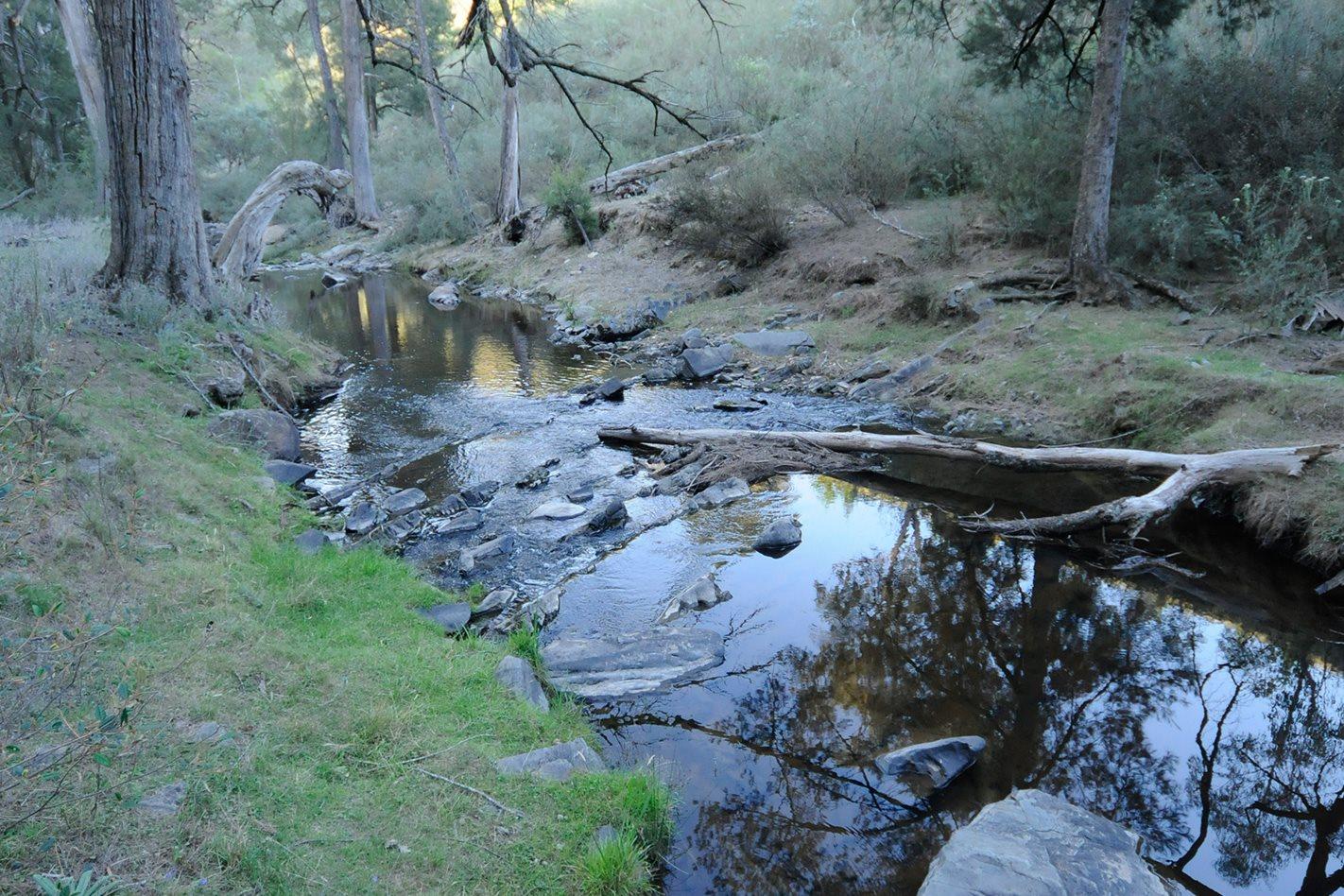 abercrombie-River-NP,-NSW-creek.jpg