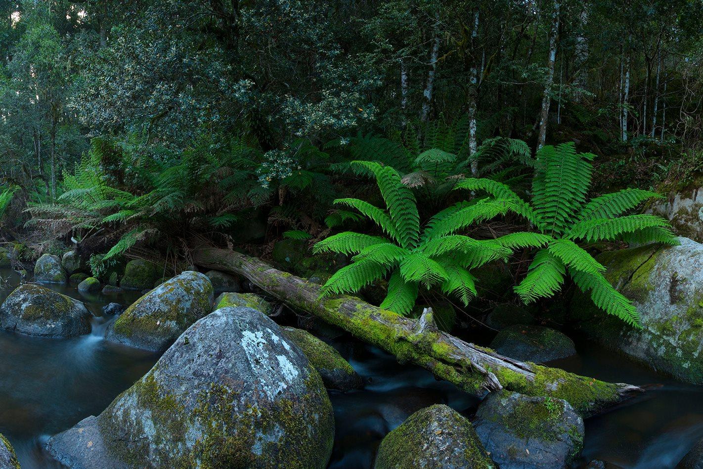Barrington-Tops-National-Park-rainforest.jpg