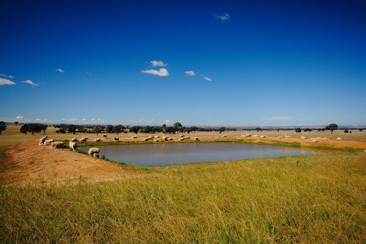 Grazing-Country,-NSW.jpg