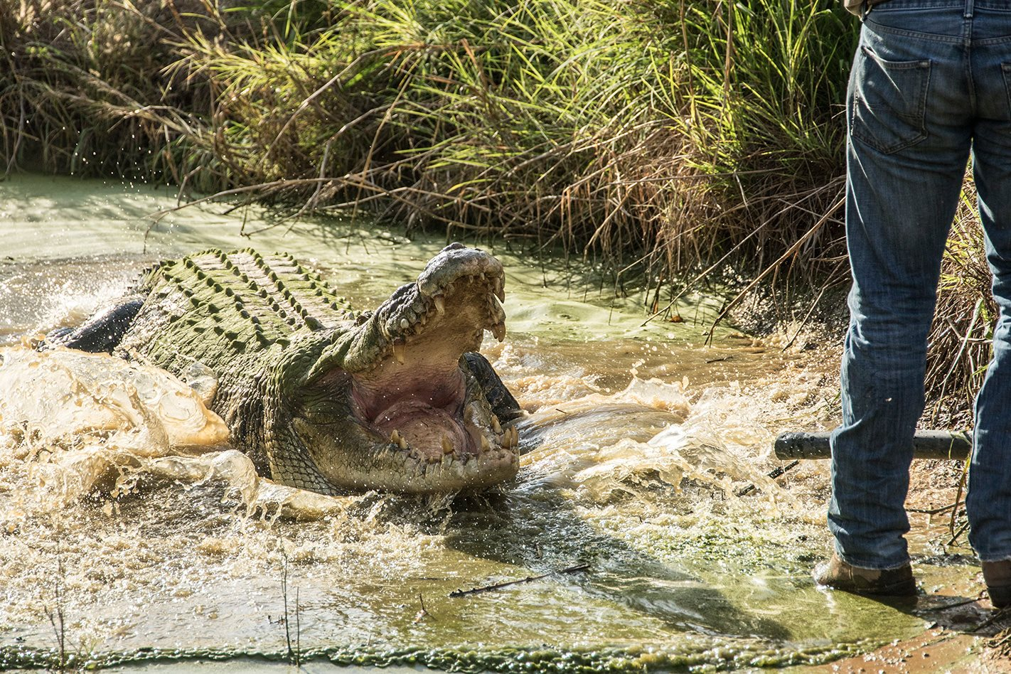 outback wrangler saltie crocs