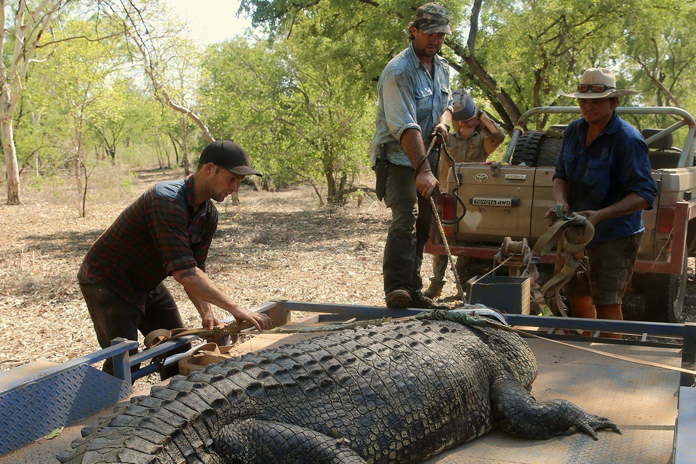 saltie croc