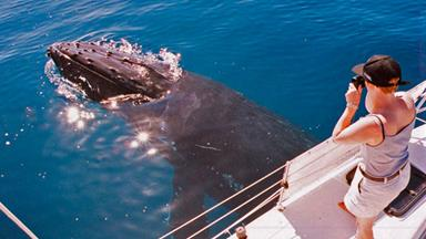 Whale watching on Fraser Island
