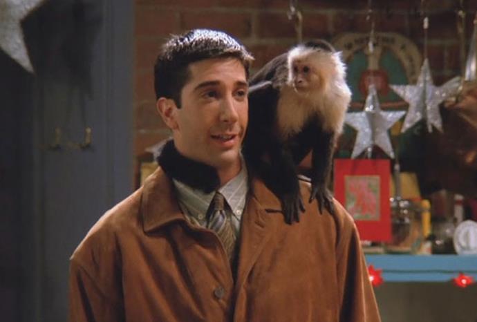 Marcel the monkey from *Friends*.