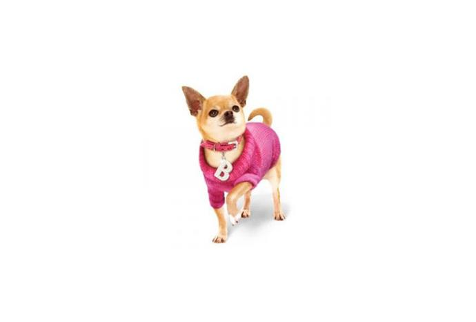 Bruiser from *Legally Blonde*.