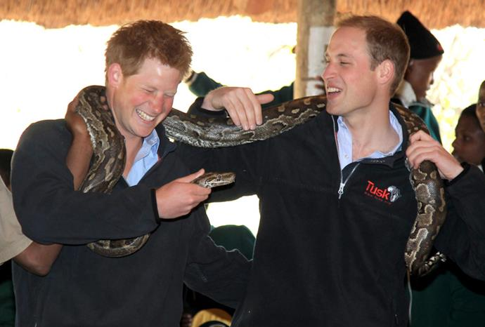 William soon had Harry in stitches of laughter.