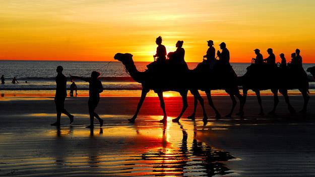 Camels on the beach, Broome
