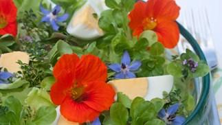 In bloom: Edible Flowers
