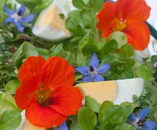 In bloom: Edible Flowers