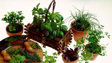 Herbs: Fresh, dried or frozen?