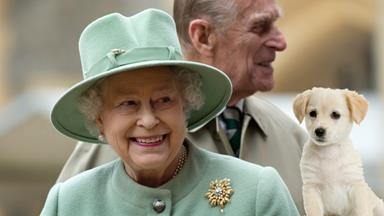 Queen names puppies after Harry Potter characters