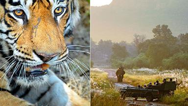 Holiday idea: Indian safari