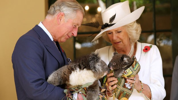 They also had a sweet playdate with a pair of baby koalas.
