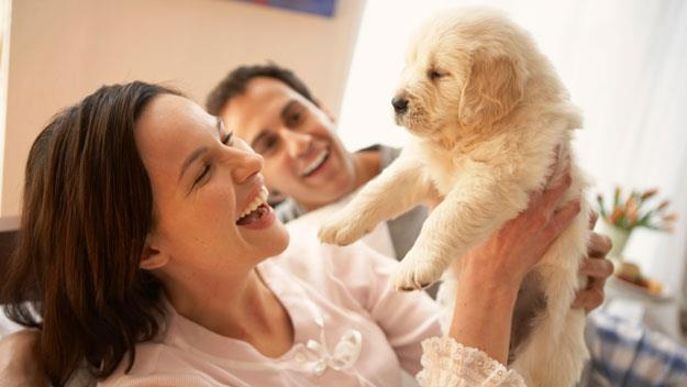 Good marriage and a puppy the secret to a happy life