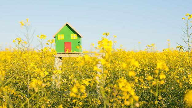 Green house and garden