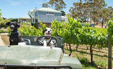 Wine, food, heart and soul: Discovering the Adelaide Hills