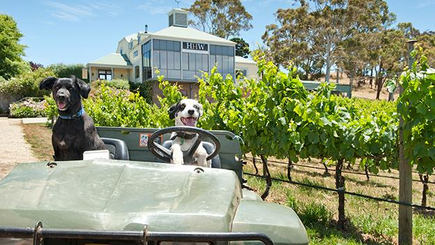 Dogs riding tractor, dogs driving car