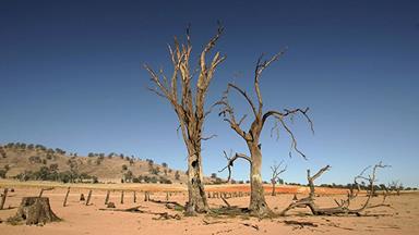 Diary of a drought-stricken farmer