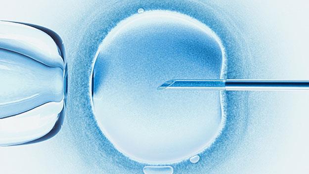 IVF pregnancy