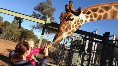 A trip to Dubbo's Western Plains Zoo