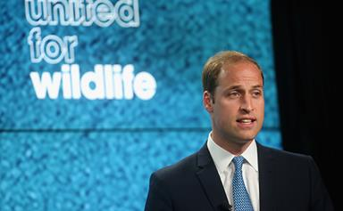 Prince William teams with Angry Birds to stop illegal poaching of animals