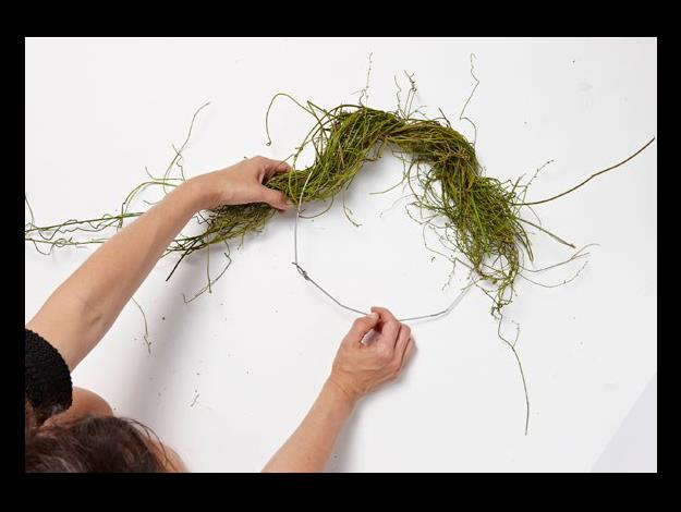 Start by wrapping a large bunch of dodder vine around your wire frame. Loop the vine in and out of the frame to wrap around it – it will all stay in place because of the consistency of the vine. Build up the wreath with small bunches of vine until it's completely covered.