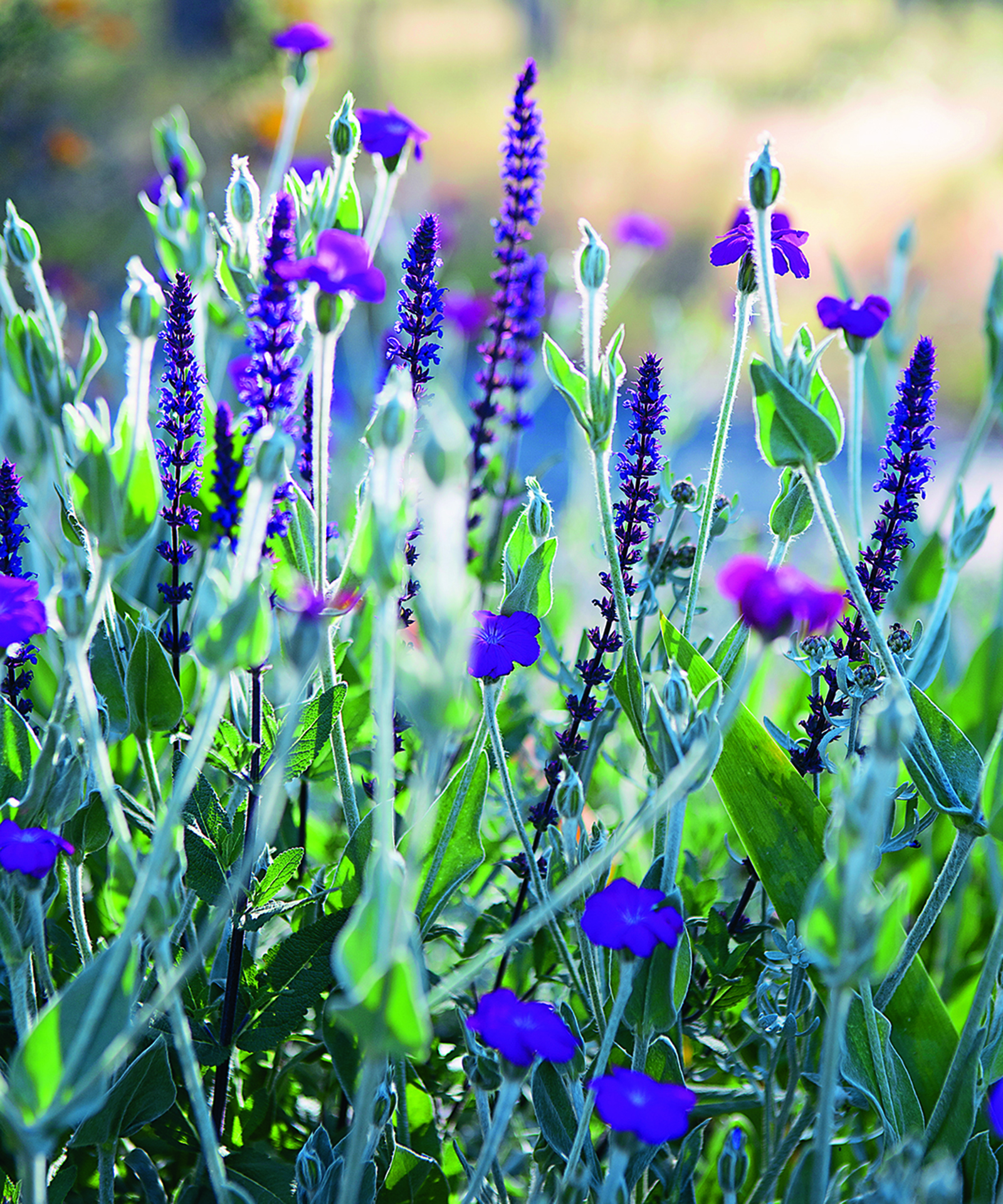 February Gardening Ideas: Jackie French's Garden Tips For February