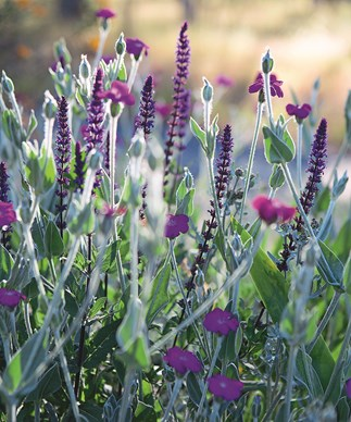 Jackie French's garden tips for February